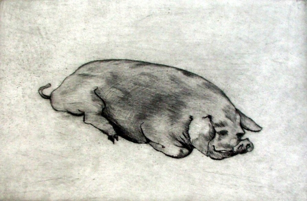 "Fat Pig, drypoint, 5""x7"""