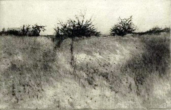"Orchard Unmowed, drypoint, 5""x8"""