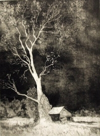 "Storm and Sycamore, aquatint, 12""x9"""