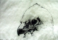 "Eagle Eye, stipple drypoint, 8""x12"""